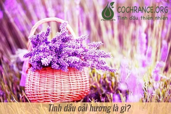 Tinh dầu hoa oải hưởng Lavender là gì?