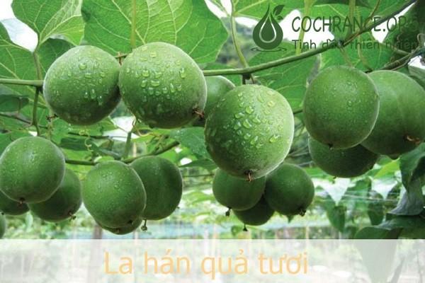 La Hán quả là một vị thuốc bổ được sử dụng nhiều trong Đông Y với những công dụng tuyệt vời