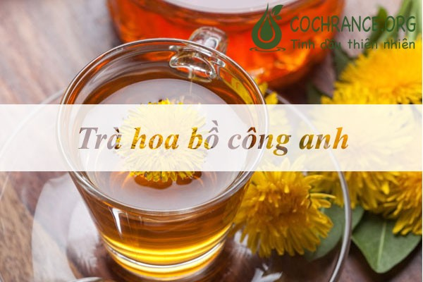 Minh họa: trà hoa bồ công anh
